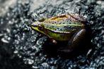 Der Frosch...