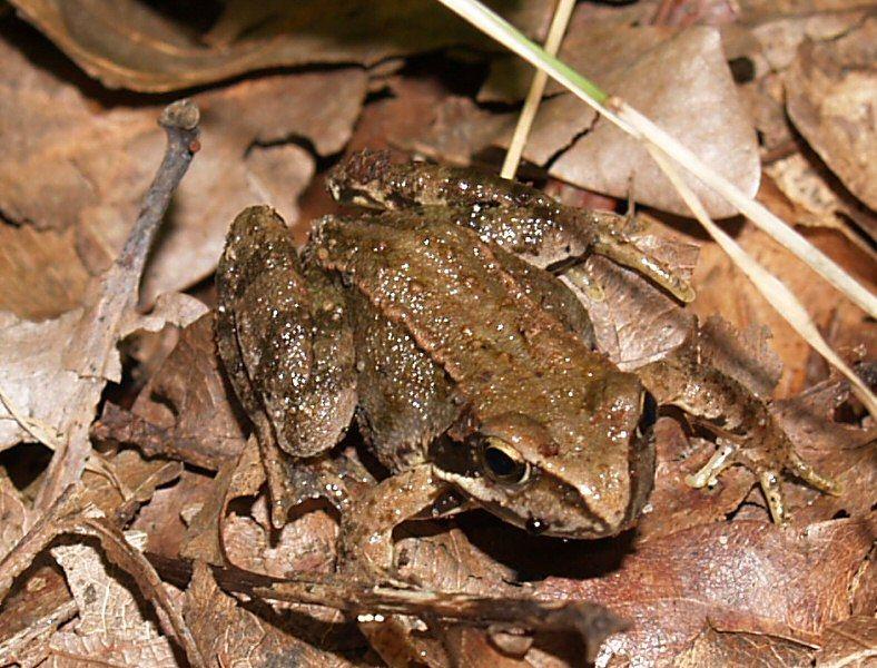 Der Frosch ansich, ist gut getarnt :-)