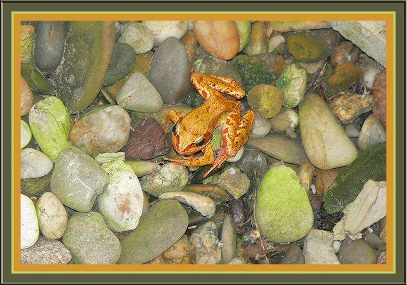 Der Frosch in unserem Lichtschacht