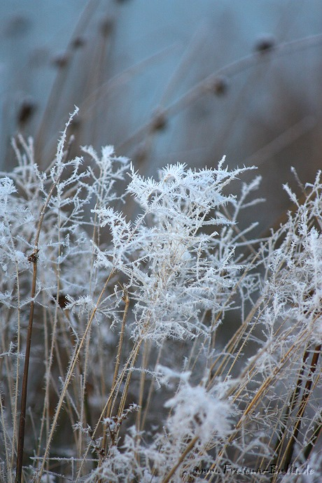 Der Frost ist da ... :-)