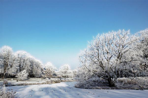 Der Frost kam, sah und siegte