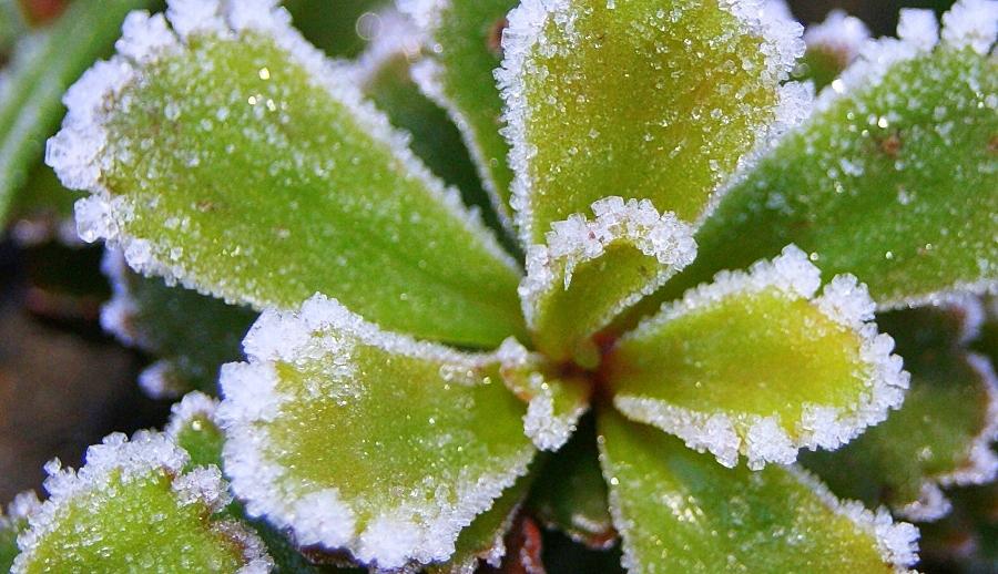 Der Frost kommt