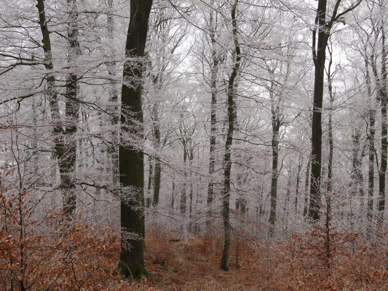 Der Frost kommt zurueck