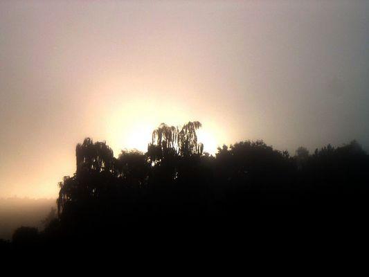 Der frühe Morgen