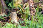 der frühe Vogel