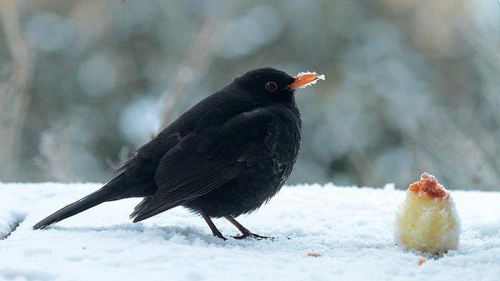 °° Der frühe Vogel... °°