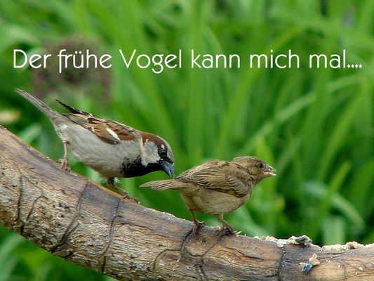 Der frühe Vogel....