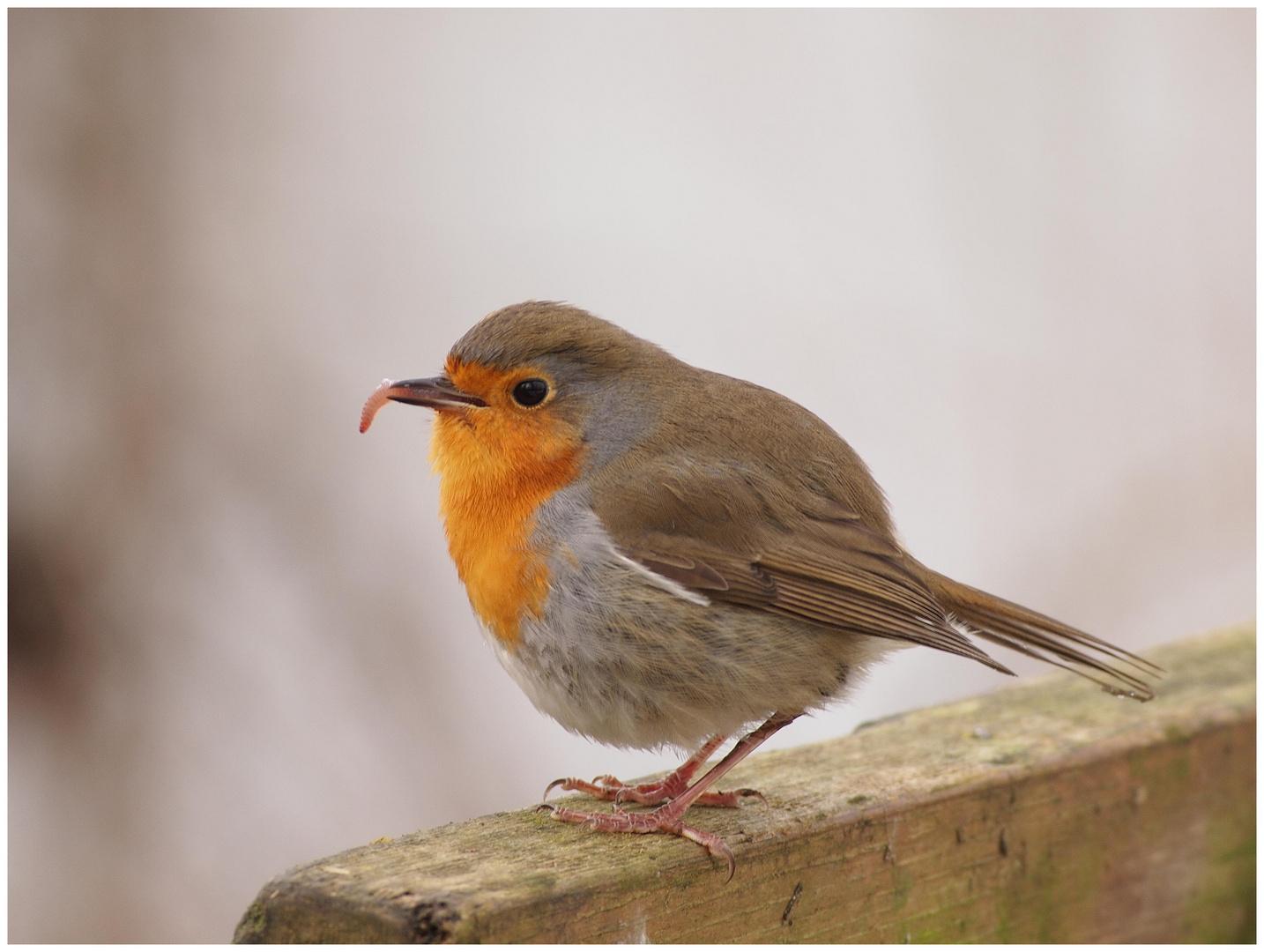 """"""" der frühe Vogel..."""