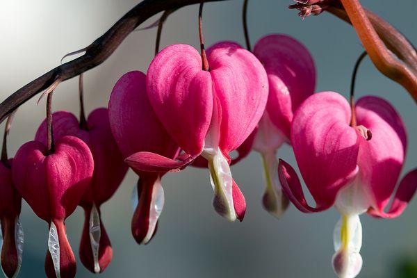 Der Frühling.......