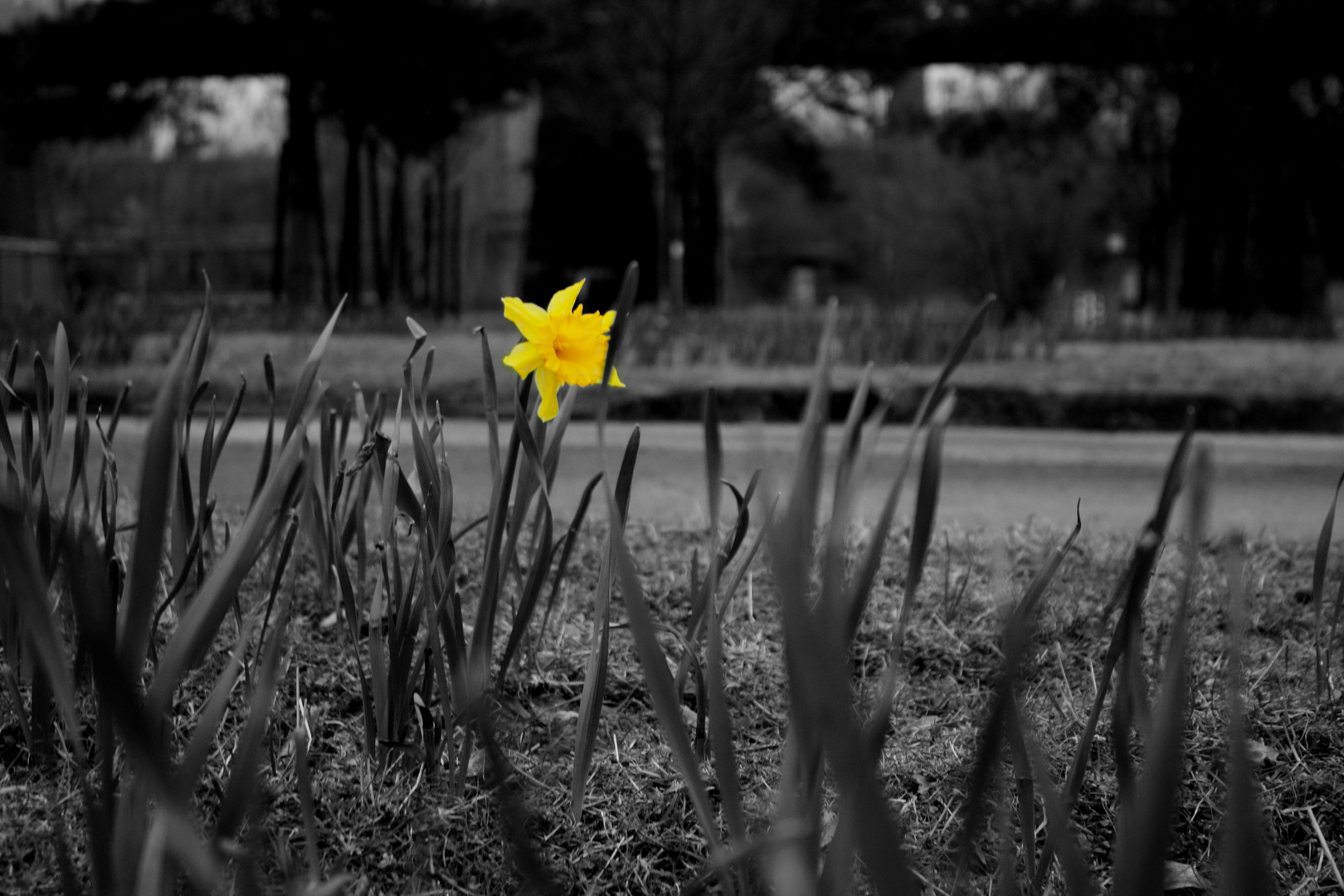 Der Frühling 2013 kommt doch