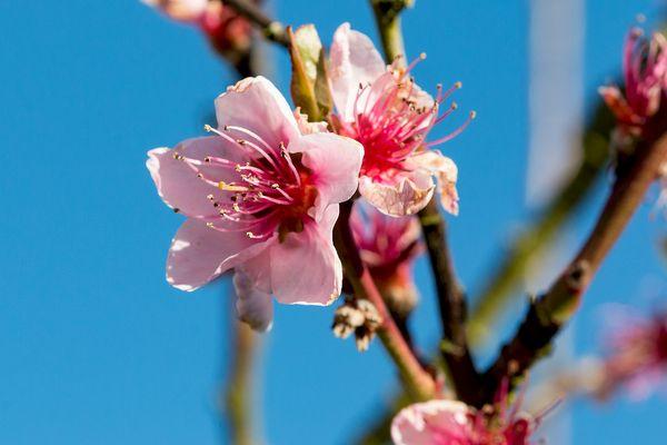 Der Frühling..