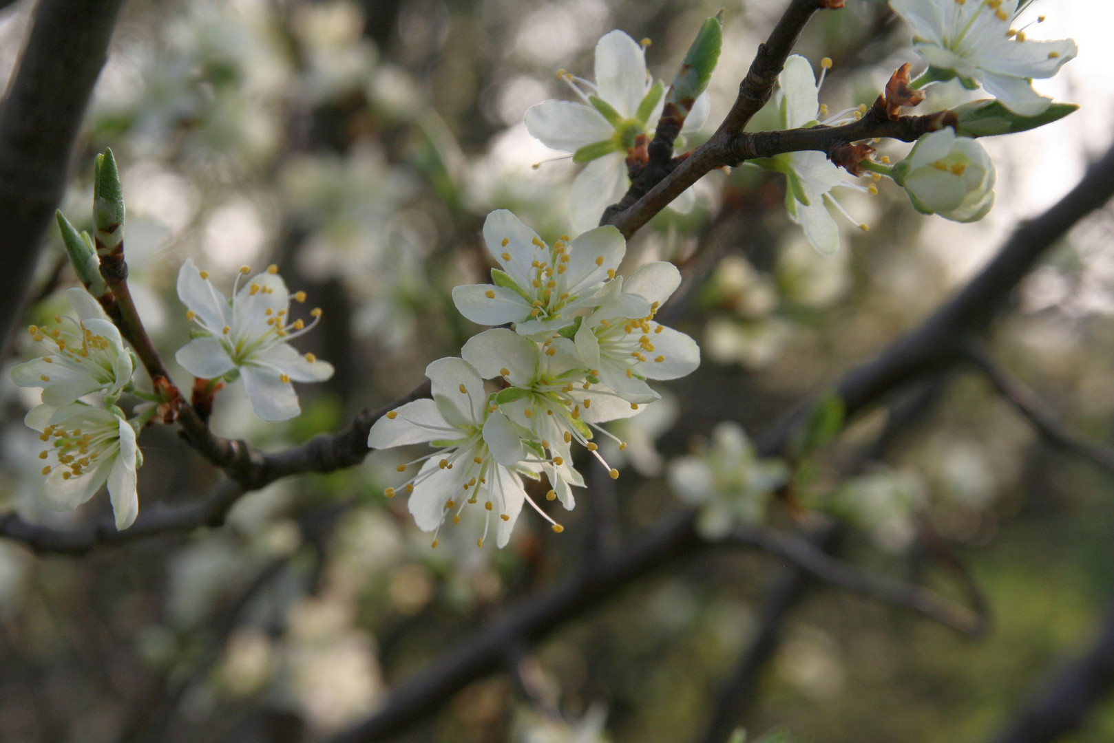 Der Frühling ..