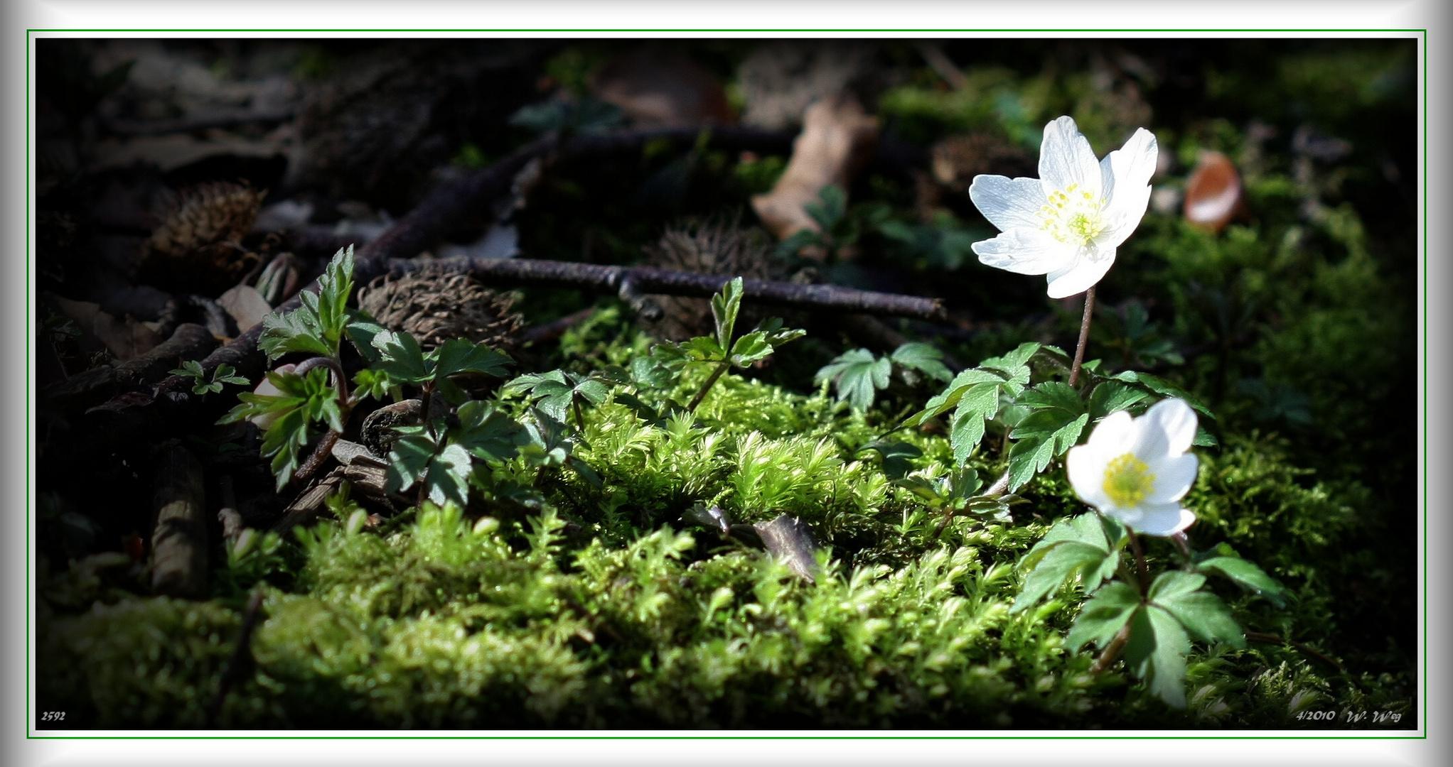 der Frühling...