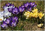 der Frühling . . .