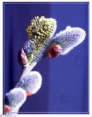 Der Frühling bricht auf