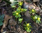 Der Frühling bricht schon durch