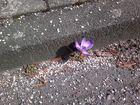 Der Frühling bricht sich seine Bahn