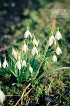 der Frühling darf kommen
