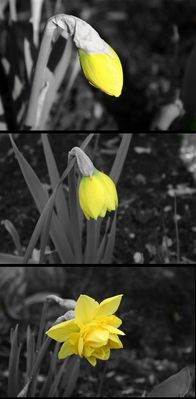 Der Frühling erwacht...