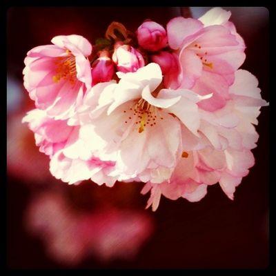 Der Frühling färbt lansam mein Garten und auch mein Gemüt