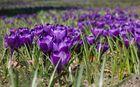 Der Frühling - ganz nah