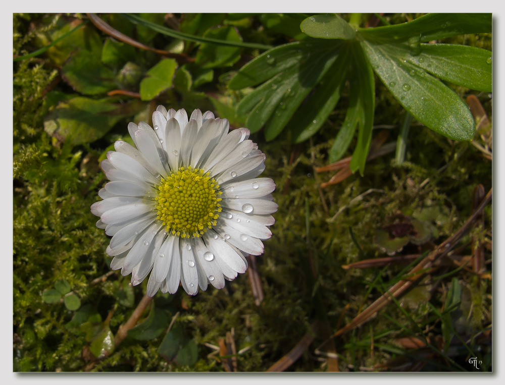 Der Frühling hat begonnen und..................