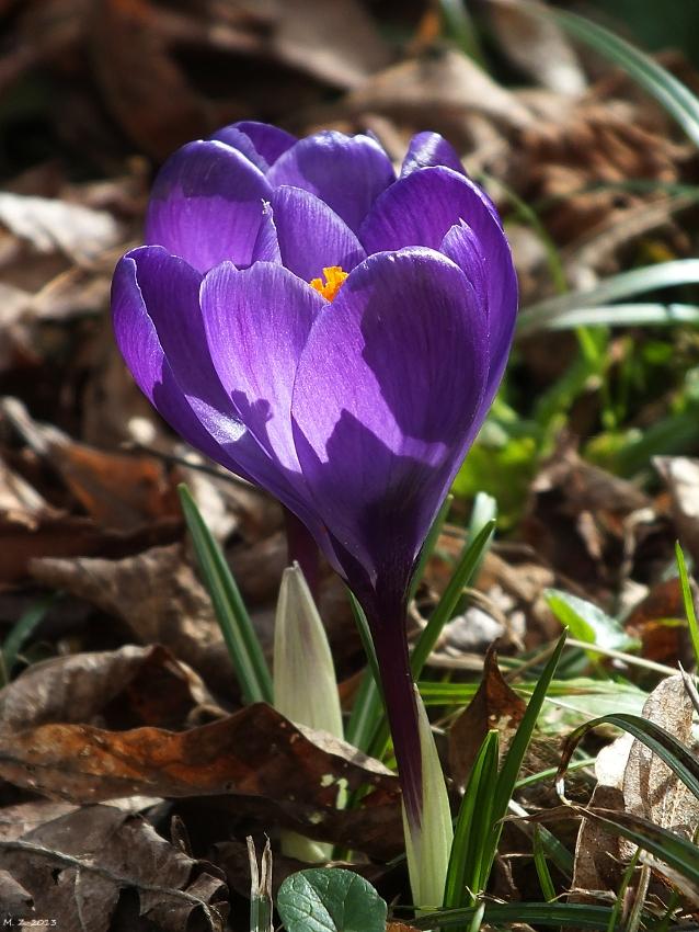Der Frühling hat uns schon mal kurz geküsst...