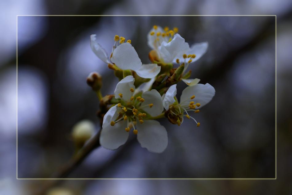 Der Frühling hinterläßt seine ersten Spuren