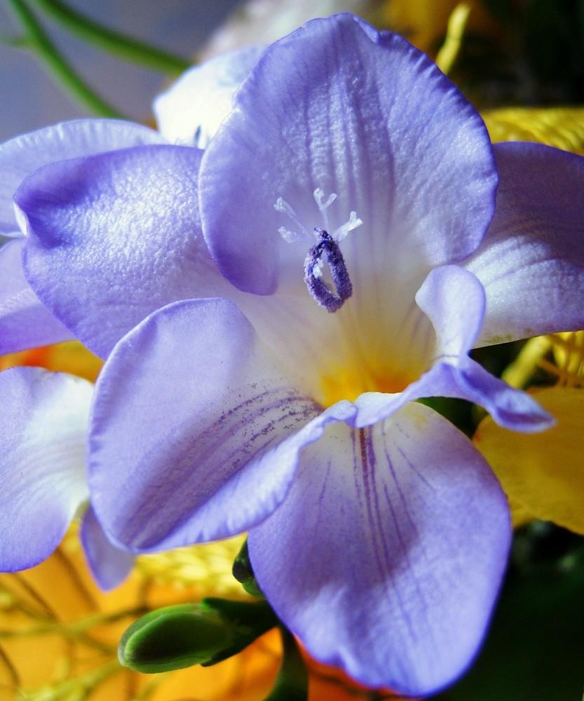 Der Frühling im Blumenstrauß....
