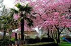 Der Frühling im Merziger Stadtpark ...