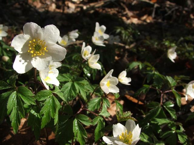 Der Frühling im Wald