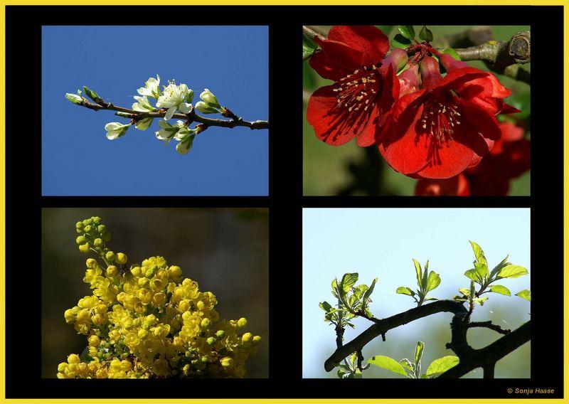 Der Frühling in seinen schönsten Farben