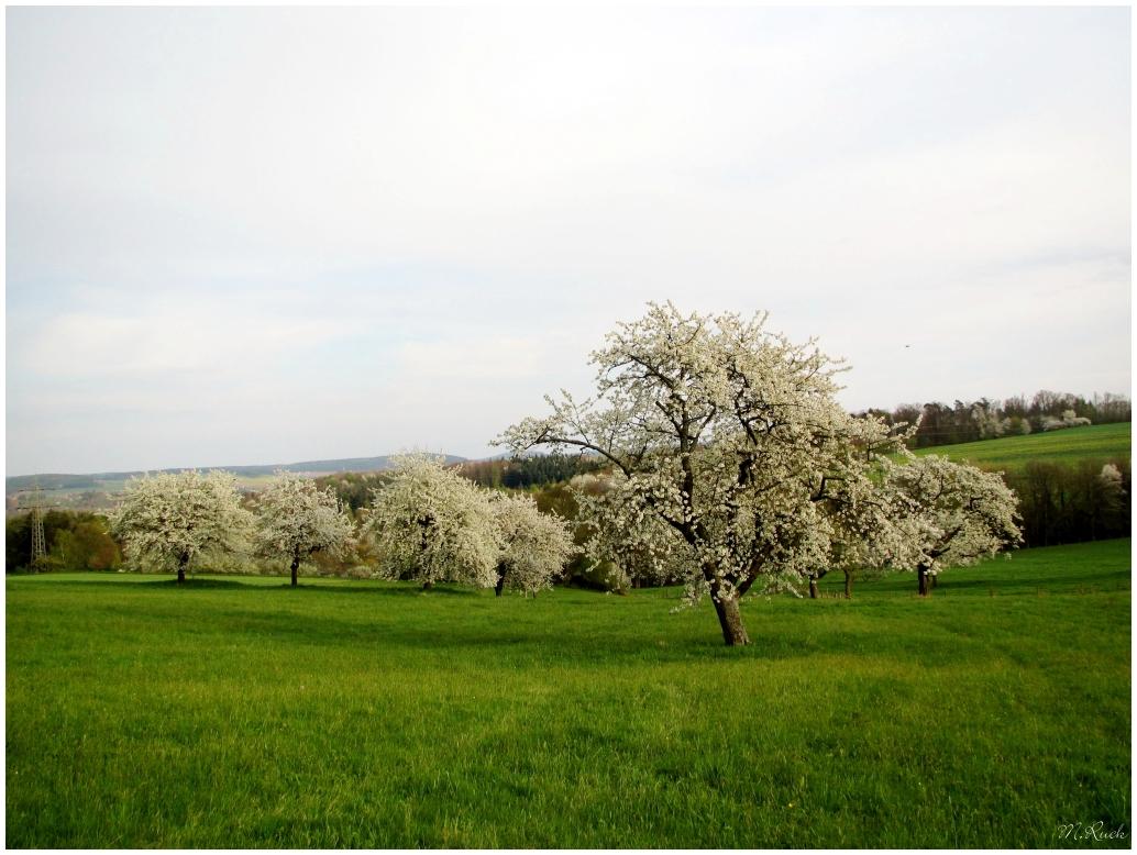 der Frühling in seiner ganzen Pracht ,
