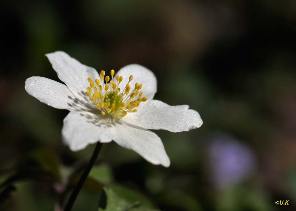 ...der Frühling ist angekommen...