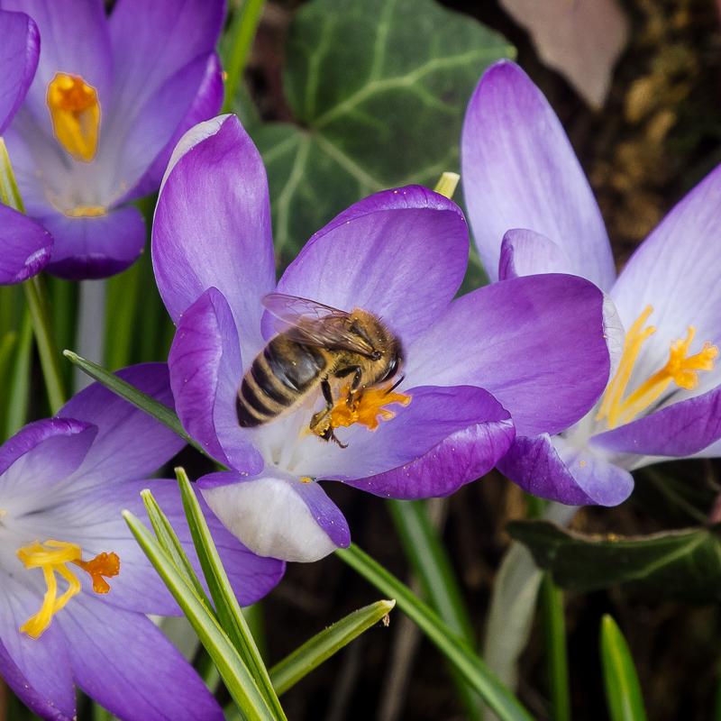 Der Frühling ist angerichtet