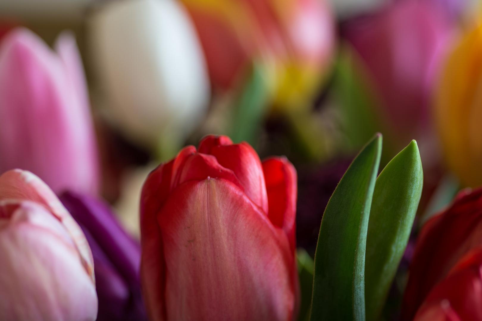 Der Frühling ist bunt