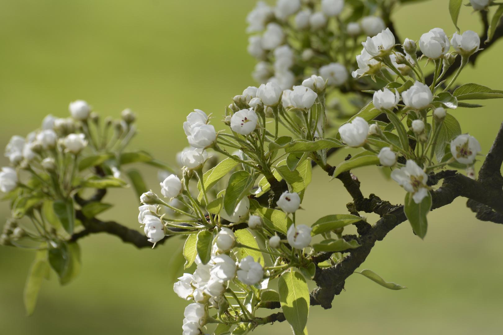.... der Frühling ist da