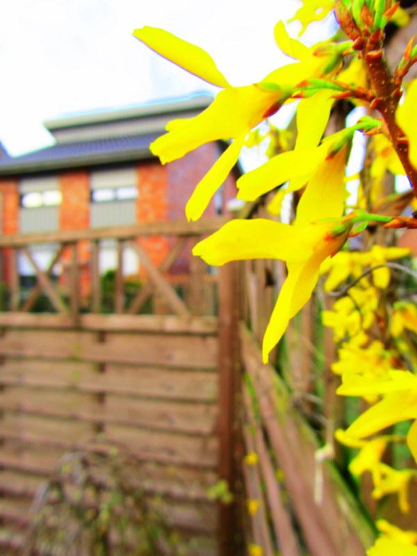 Der Frühling ist da.