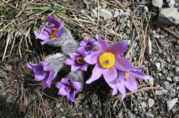 Der Frühling ist da!!