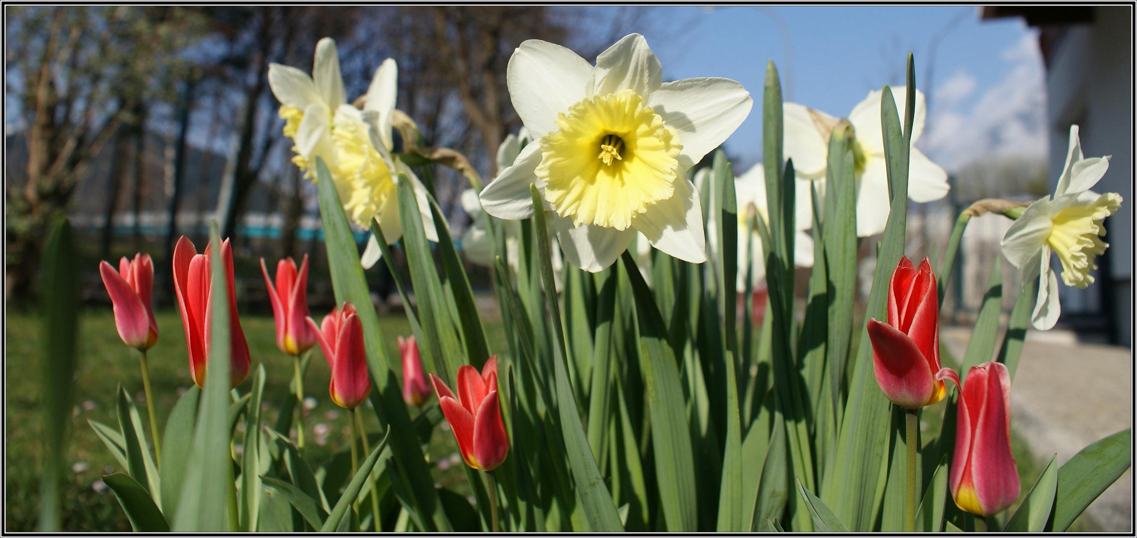 der Frühling ist da 2