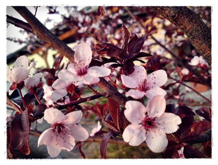 Der Frühling ist da :)