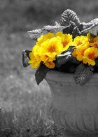 Der Frühling ist da...