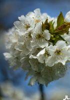 Der Frühling ist da....