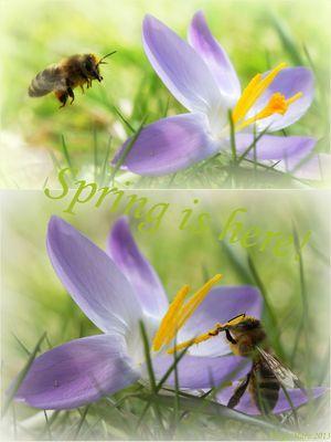 Der Frühling ist da ...