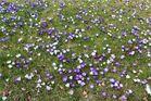 ... der Frühling ist da !