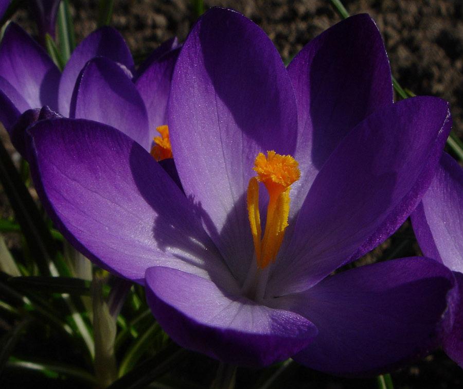 Der Frühling ist da.....
