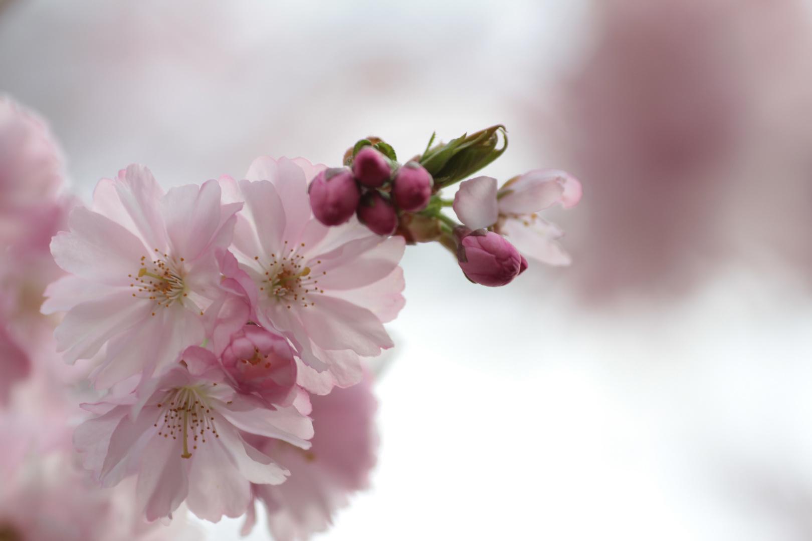 Der Frühling ist da ;-)
