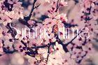 Der Frühling ist da, mit all seinen Farben