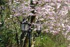 Der Frühling ist da und