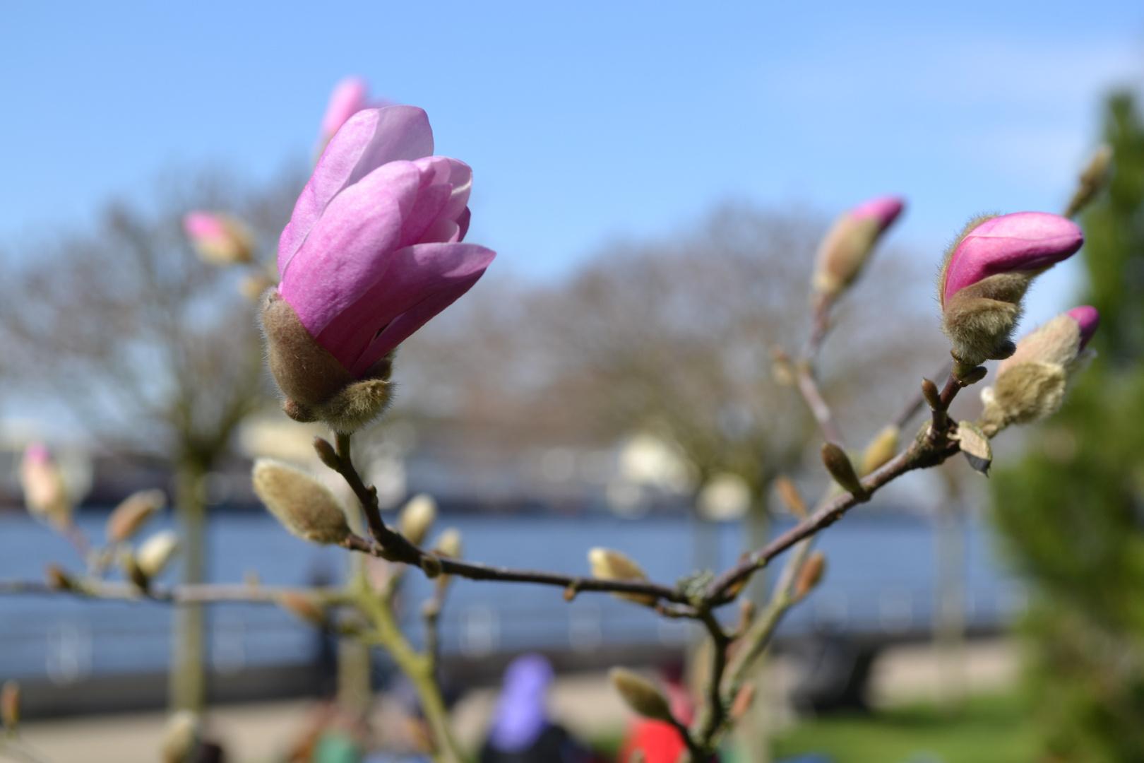 Der Frühling ist die schönste Zeit!